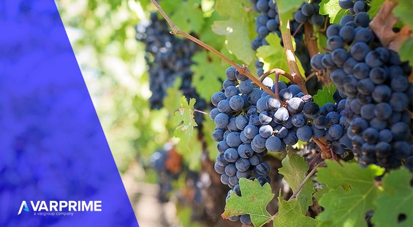 La gestione dell'ospitalità per il mondo vinicolo su Dynamics 365